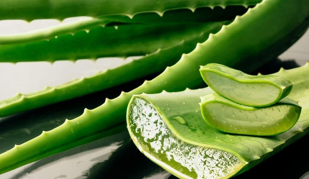 Aloe Vera-sap: Topverzorging voor maag en darmen